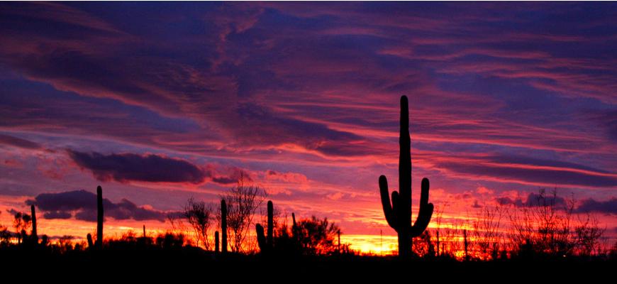 https://secure.emochila.com/swserve/siteAssets/site8027/images/sunset-cactus1.png